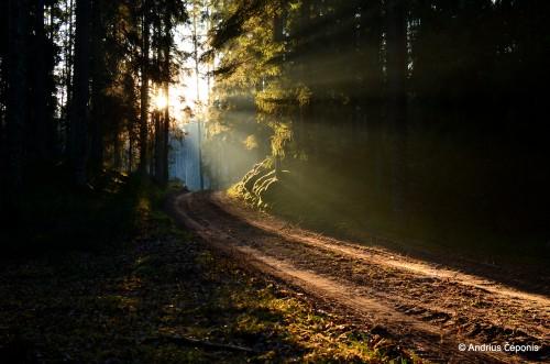 Karšuvos girioje (Andriaus Čeponio fotografija)